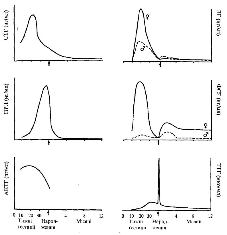 Динаміка секреції гормонів гіпофіза під час гестації та в ранній постнатальний період