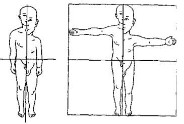 Співвідношення пропорцій тіла дитини і дорослого